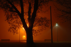 Fogfire (~EvidencE~) Tags: longexposure orange toronto ontario tree fog night bench fire amber streetlight glow nikond70 lifeguard explore lakeontario evidence outstandingshots location~ashbridgesbay 13secondexp fogfire