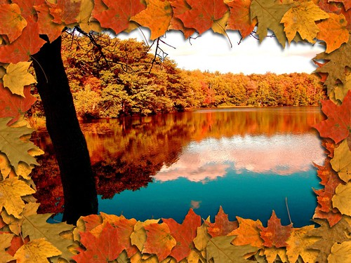 Fall leaves reflection