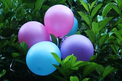 balloons sitting in a bush (arfblat) Tags: pink blue green leaves balloons bush holding sitting purple held