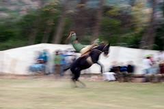 IMG_4117 (fayesta) Tags: travel horses horse fall argentina cowboys cowboy riding rodeo gauchos salta gaucho doma jineteada escoipe argentinatravel