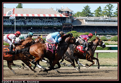 Babies on the Run (Rock and Racehorses) Tags: horses ny start gate saratoga grandstand gallop 2yo srart