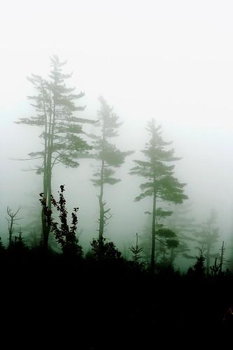 Heavy fog 1