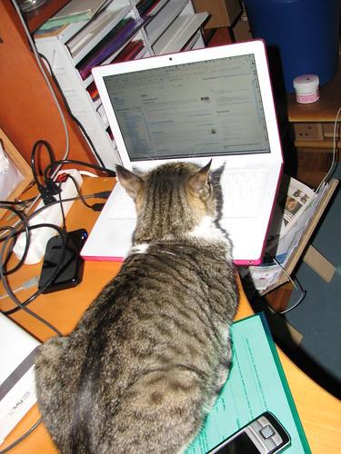 Gato leyendo Google Reader