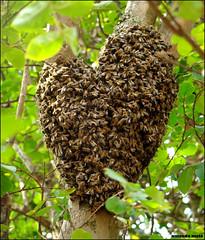 abelhinhas em forma de coração! by amanda.melo
