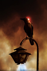 The Blind Raven (Kaidohmaru*) Tags: sunset sun india bird lamp animals clouds dark fire apocalypse doom raven mysore cuervo rabe darksky corvo edgarallanpoe theraven grandcorbeau cotcpersonalfavorite blindraven    atqueartificia