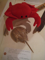 Royal Ontario Museum (25) (chicgeekuk) Tags: red toronto ontario laura animal toy crab plush claw abroad stuffedanimal seafood claude crabs crustacean rom claws royalontariomuseum kishimoto travellingtoys travellingtoy laurakishimoto laurakishimotoca claudeabroad