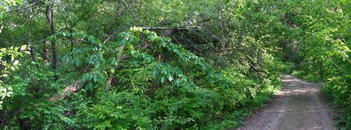 Broken Tree 01