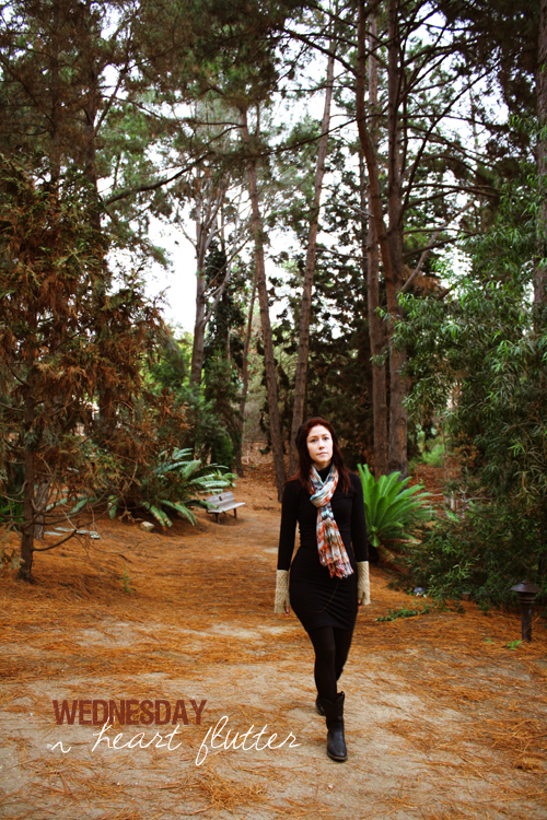 *a walk through a pine tree forest*