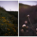 moody friday flora by jasfitz