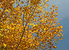 Autumn leaves, north of Mitrovica, Kosovo, November 7, 2010 (Ivan S. Abrams) Tags: autumn trees fallcolors kosovo foilage ivansabrams thebestofday gününeniyisi nikonflickrawardgold abramsandmcdanielinternationallawandeconomicdiplomacy ivansabramsarizonaattorney ivansabramsbauniversityofpittsburghjduniversityofpittsburghllmuniversityofarizonainternationallawyer