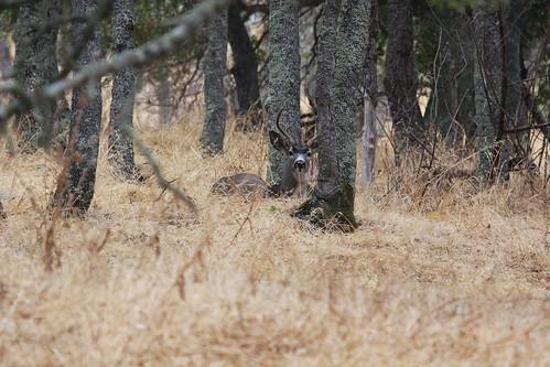 hiddenbuck dave harper oakley