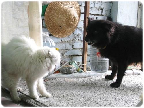 101114-狗和貓的相遇
