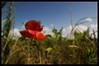 Orton Effect Flower (Adam FLiK) Tags: flower nature effect orton flikproductionscom flikproductions adamflikkema