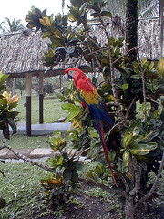Bird at lunch spot in Belize_jpg