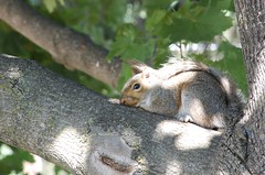Comfy Branch! (WhtNyte) Tags: nikon squirrel branch telephoto d40 55200mmf456gvr bokehwhores