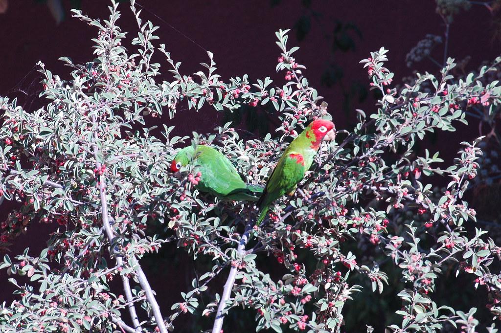鸟的故事 - 艾小柯 - 四处游荡的艾小柯