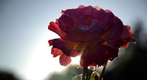Flores al contraluz 01