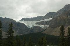 20070807-DSC_0382 (jgreenberg) Tags: banff icefieldsparkway canadianrockies crowfootglacier