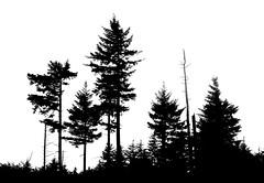 Trees 7365 (CatDancing) Tags: blackandwhite bw tree silhouette northcarolina onwhite 123bw
