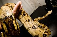 And she's getting bigger and bigger... (DSFineArt) Tags: animal nikon d70 reptile snake fisheye tokina 1017mm