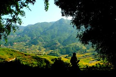 The man who chills in the shade (GigoloArt) Tags: green nature rice vietnam farmer viewpoint ricefields sapa landside