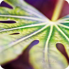 A leaf out of my book (Mike Golding) Tags: plant green nature leaf focus dof purple bokeh 85mm left f12 ef85mmf12