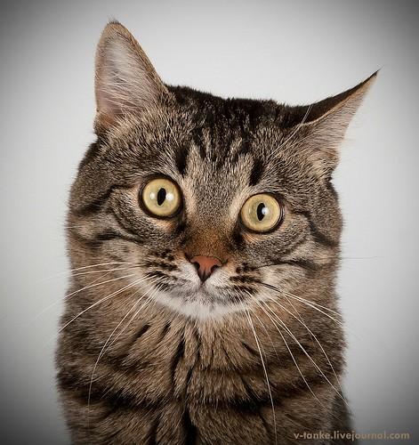 Всем поклонникам кота Пиндыка посвящается :) Pindo & Co (2)