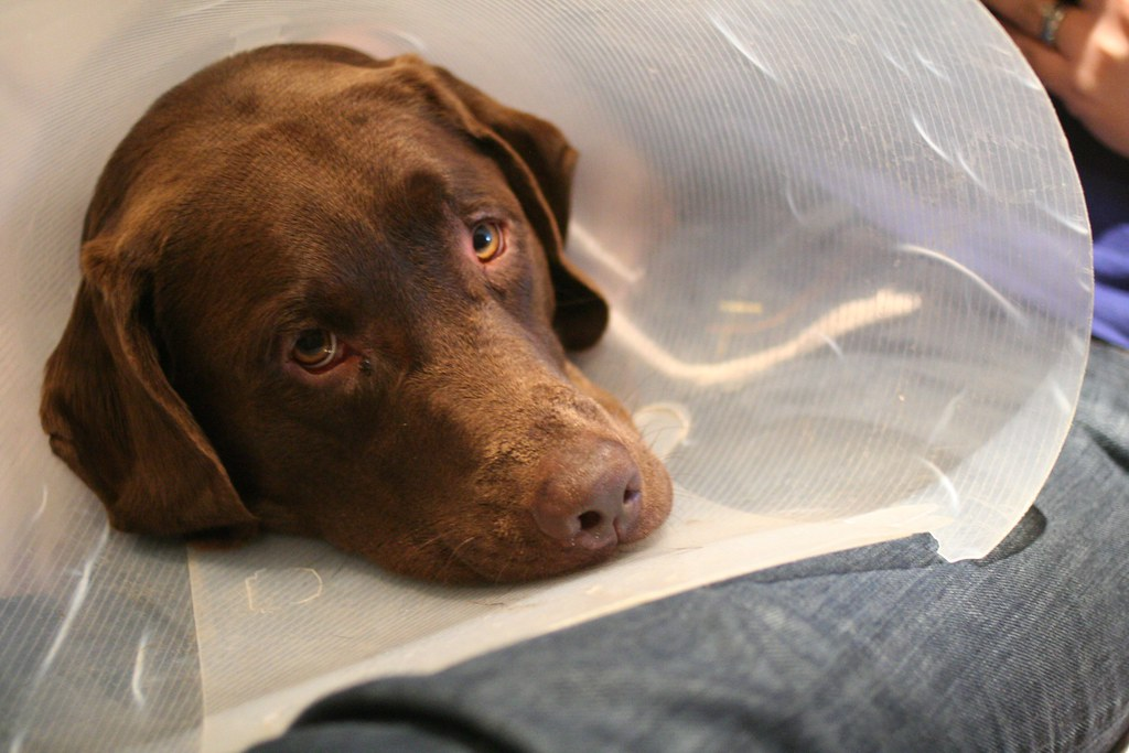 Cooper with Cone