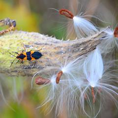 bold-colored bug (Wade Bryant) Tags: fall nature yard nikon detroit tracks seeds railyard between 2010 dx livernois 1685mm d7000 nirkkor