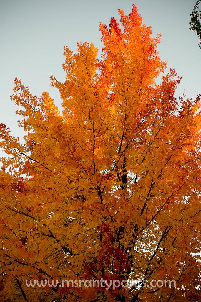Fall Color 2010-5.jpg