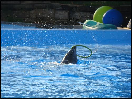 Espectáculo Delfines (6)
