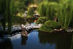 Chinese Gardens - Tilt Shift (lachlansear) Tags: interestingness interesting sydney scout explore chinesegarden soe tiltshift top500 10faves aplusphoto