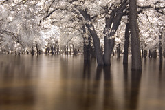 the drowning trees (infrared) (mike.irwin) Tags: longexposure trees lake water landscape ir interestingness nikon long exposure texas flood explore infrared lewisville hoya r72 abigfave diamondclassphotographer youvegottheeye wwwmikeirwinartcom
