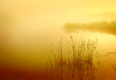 Golden pond (James Jordan) Tags: morning water fog sunrise wow gold dawn golden pond rest stillness repose jelke outstandingshots anawesomeshot topofthefog superhearts