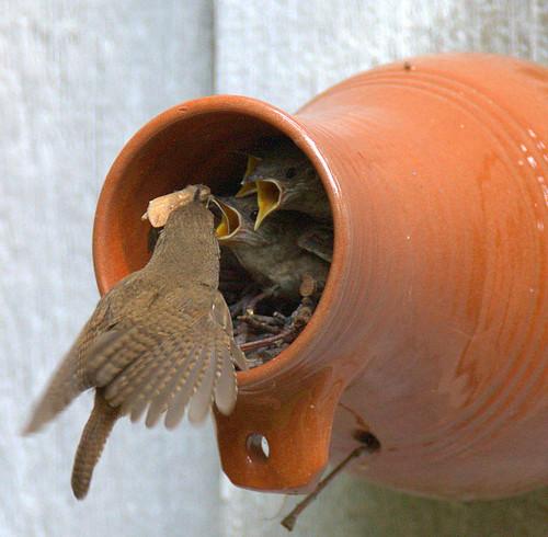 Feeding nestlings