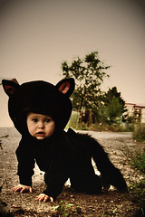 On the Prowl (boopsie.daisy) Tags: baby cute cat blackcat costume alley kitten sweet adorable kitty sadie precious meow crawl crawling pussycat alleycat prowl prowling supershot
