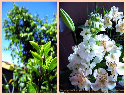 domingo azul,flores