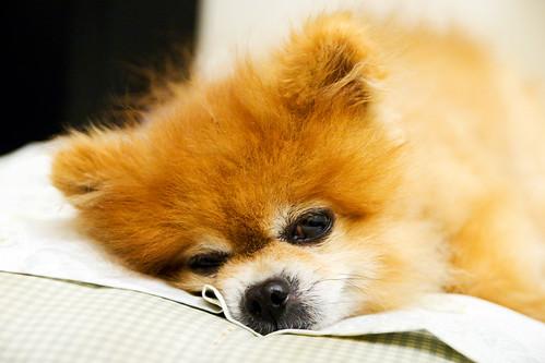 Buddy is sleepy