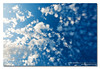 Clouds at f3.2 (Cotton Wool in a Blue Jar) ([ Kane ]) Tags: blue light sky sun white storm up clouds contrast photography afternoon dusk shapes fluffy australia brisbane qld queensland kane gledhill kanegledhill wwwhumanhabitscomau kanegledhillphotography
