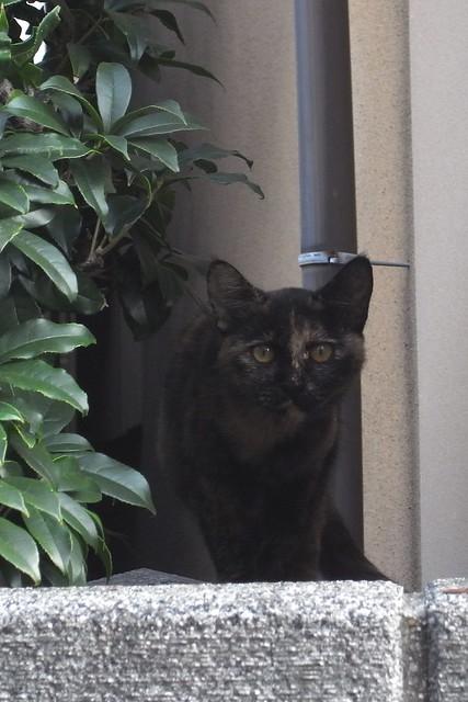 Today's Cat@2010-10-23