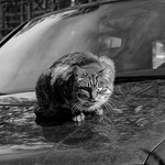 car cat thumbnail