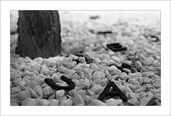 (Kowska) Tags: bw black trix bn alicante 400 rodinal whote finestrat kodal marinabaixa standdevelop filmdev:recipe=6196