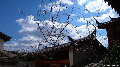 麗江 古城 客棧
