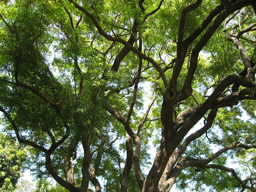 Chavez Ravine Arboretum