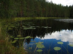 pyylampi (vanikat) Tags: lake reflection clouds forest shore ranta pilvet jrvi heijastus irresistiblebeauty lumpeet