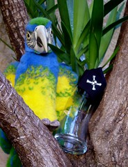 Glass 40/365 (Murfomurf) Tags: glass oneaday backyard pirates parrot yucca skullandcrossbones arrrrgh talklikeapirate 365days murfomurf wowiekazowie oneobject365daysproject