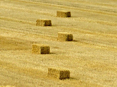 Landscape - Straw Bales, Geometry (Olof S) Tags: county summer wallpaper abstract color colour art nature field yellow composition rural canon landscape photography landscapes is photo interesting artwork cornfield scenery europe view artistic sweden schweden country natur picture straw natura swedish powershot land environment nordic sverige pastoral scandinavia bale paysage landschaft paesaggio suede suecia srmland senso ker landskap trosa manzara sauvage svezia geometri szwecja sdermanland a710  25faves sdesflt a710is feldt halmbalar aplusphoto theperfectphotographer kornfeldt halmbal