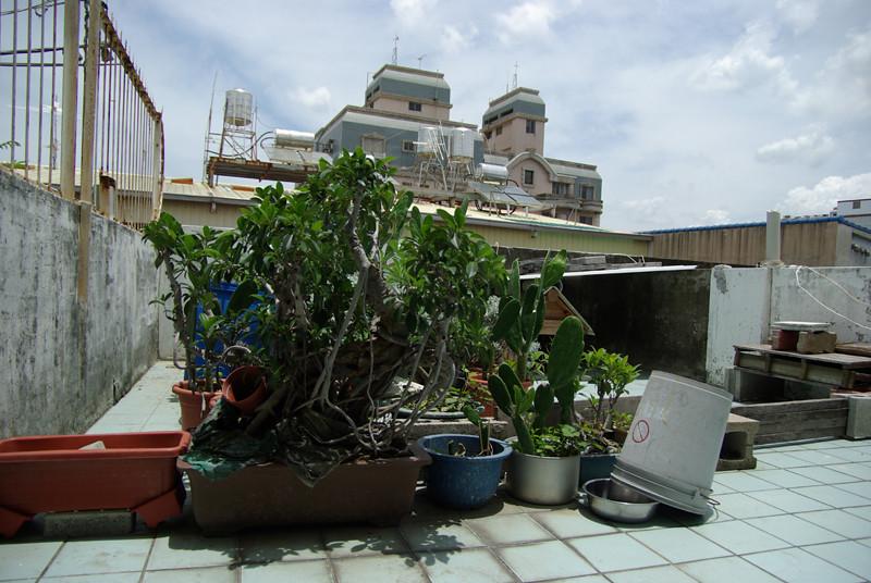 20100618小陽台的生態系