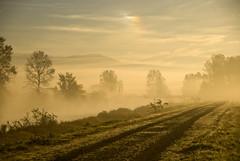 Dike Morning 3 (showbizinbc) Tags: mist misty fog sunrise river bc earlymorning mapleridge dike pittmeadows