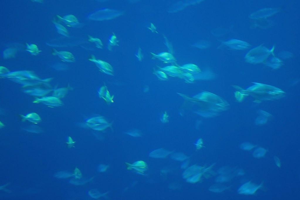 fish 3 ©2007 RosebudPenfold